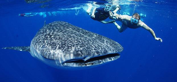 6-swim-with-sharks-cancun