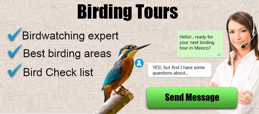 birding tours cancun riviera maya cozumel