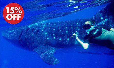 whale shark tour cancun 2018