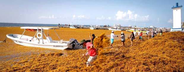 Winter Cancun Vacations Canceled Seaweed Sargassum effects all over Riviera Maya