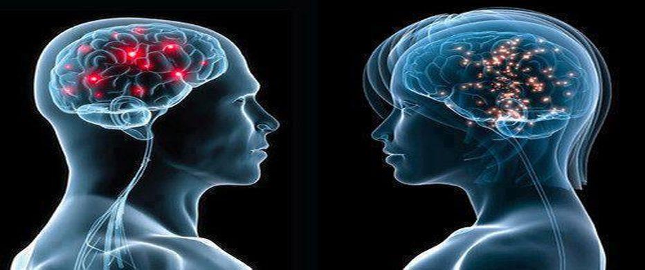 https://i2.wp.com/www.contrainfo.com/wp-content/uploads/2014/10/cerebro_masculino_y_femenino.jpg