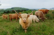 Flavour Fortnight: Meet the Highlanders with Nigel and Angela Taylor (Barlochan Highland Beef), and National Trust for Scotland