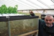 Flavour Fortnight: Aquaponics Experience, Tilapia fish