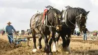 Ploughing just for farmers? Neigh, it's fun for everyone