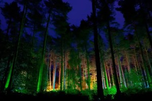 The Electric Forest, Moors Valley Country Park & Forest, Dorset