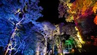 The Enchanted Forest at Faskally Wood near Pitlochry (Photo Graham Smith)