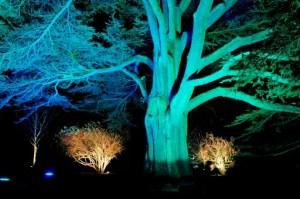 Enchanted Christmas at Westonbirt, The National Arboretum (Photo: Rob Cousins)