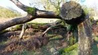 Curiosity of the Week: wish tree, Cumbria