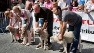 Skipton Sheep Day