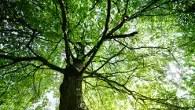 Pop up forest - Seven Dials - Covent Garden