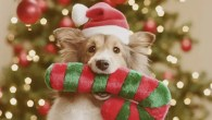 Santa Paws Grotto - Lily's Kitchen - All Dogs Matter