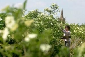 Elderflower Festival - Belvoir - Leicestershire