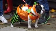 Devilish Dog Walk - Hampstead - All Dogs Matter