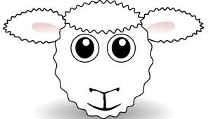 Lamb National - Stockeld Park Yorkshire