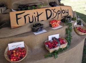 Brogdale Collections Cherry Fair - Fruit Display