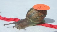 World Snail Racing Championships- Photo Tony Scase News Service Ltd