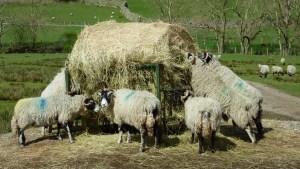 Masham Sheep Fair 2016 - Contrary Life
