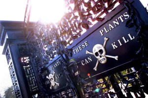 Alnwick Garden - Poison Garden