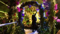Enter a tropical paradise with Kew's orchid inspired evenings