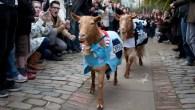 It's Oxford vs Cambridge in the famous Goat Race