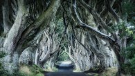 The Dark Hedges by Trevor Cole on Unsplash