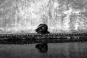 Blanco y negro - Jesmo - Dig - 1
