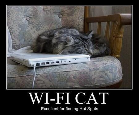 WiFi cat