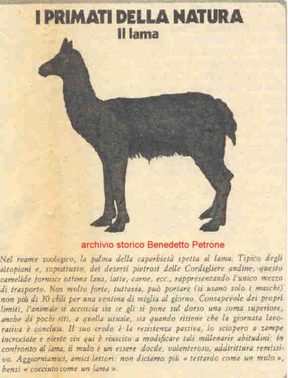 Αποτέλεσμα εικόνας για Lama, 1977, università sapienza