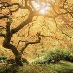 The Family Tree of Life