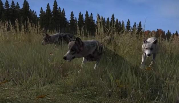 dayz lobos