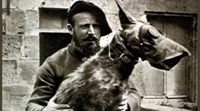 sata-cachorro-salva-vidas-primeira-guerra