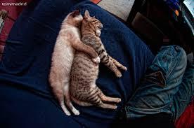 Cats spooning