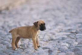 lost puppy landing page design