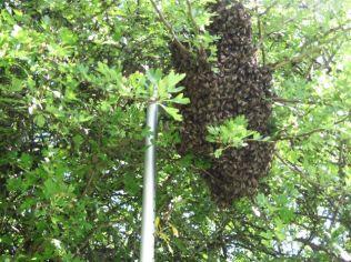 Reaching a swarm