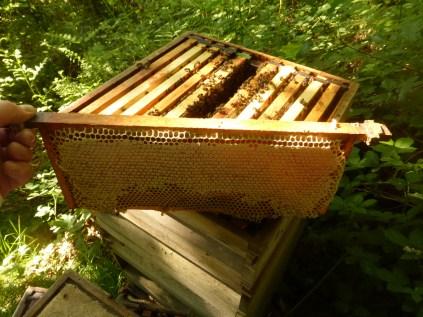 Sycamore honey, May 2017