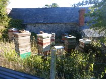 Home apiary, 9th July 2018