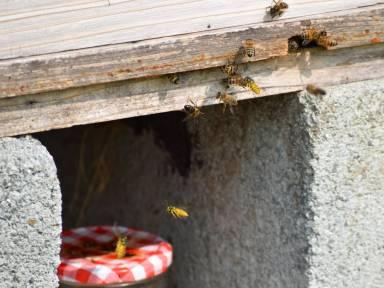 wasp c (1)