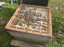 Queen excluder confines the larger queen to the bottom box. The smaller worker bees can carry nectar through the excluder and store it separately from the eggs and developing larvae in the box below.