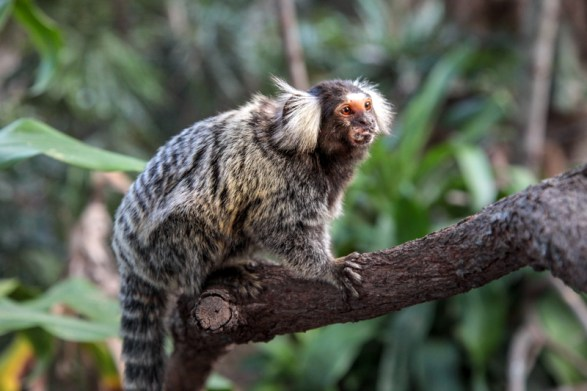 cooberrie-park-wildlife-sanctuary-56