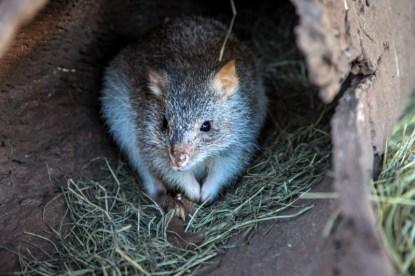 cooberrie-park-wildlife-sanctuary-68