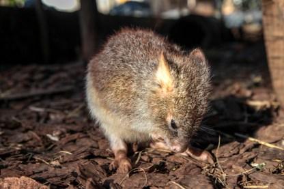 cooberrie-park-wildlife-sanctuary-70