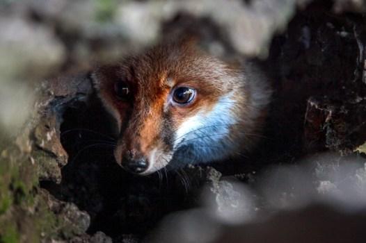 cooberrie-park-wildlife-sanctuary-73