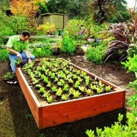 Fancy Garden Bed Borders Ideas For Vegetable And Flower 45