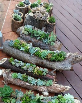 Awesome Succulent Garden Ideas In Your Backyard 11