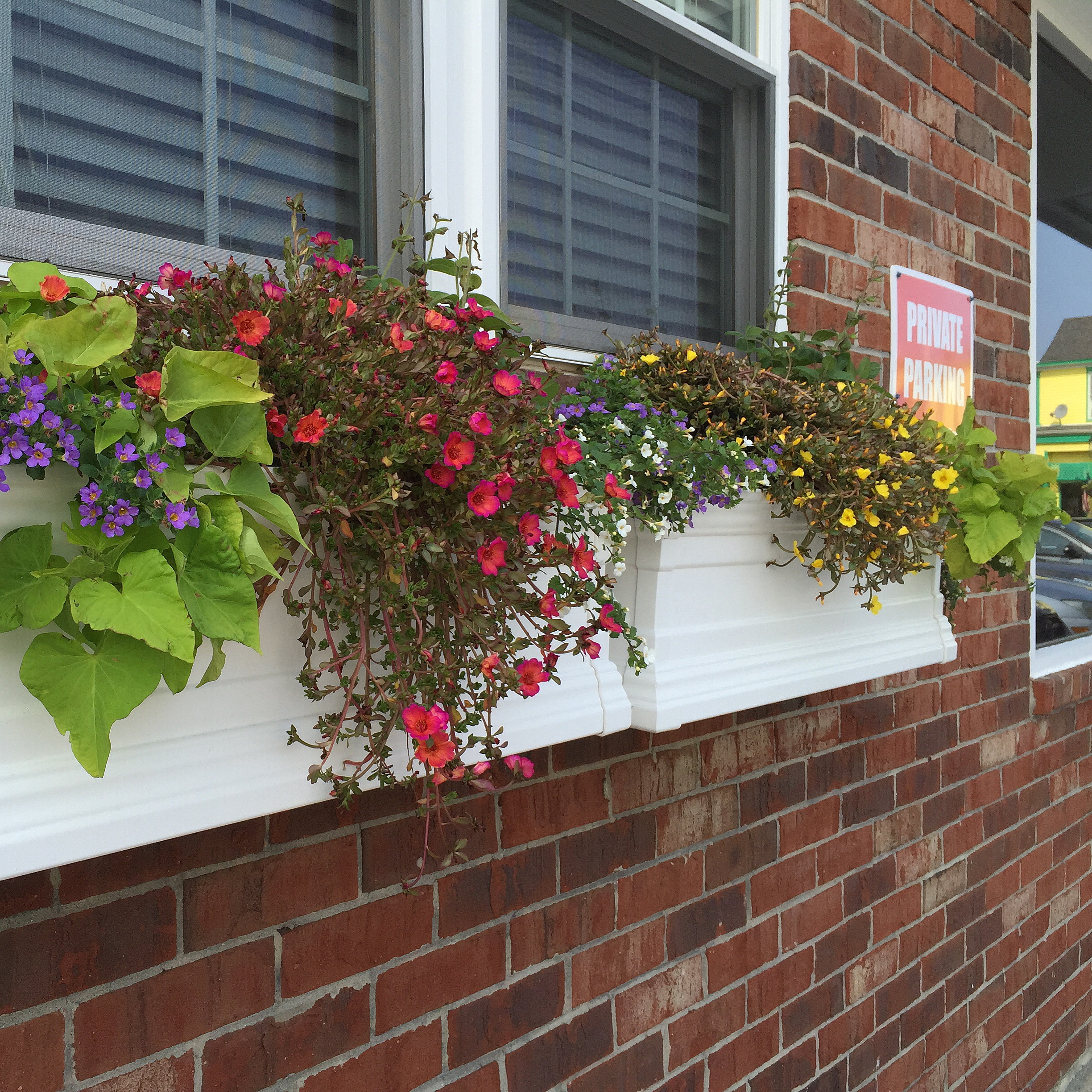 Cape May Window Boxes CookeCapeMayCookeCapeMay