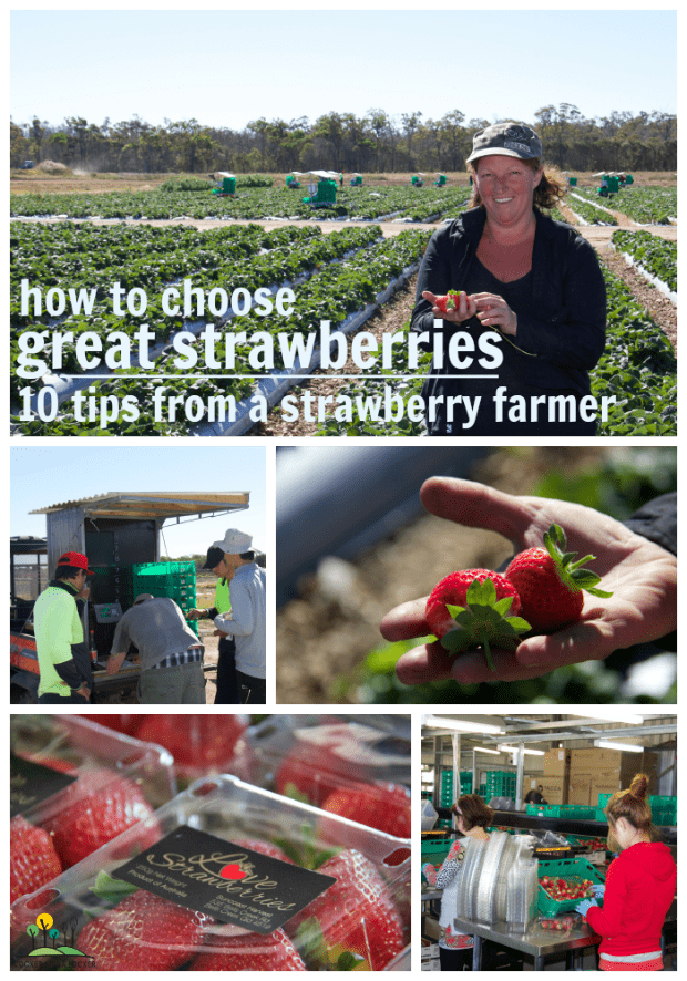 10 tips from a strawberry farmer for choosing great strawberries