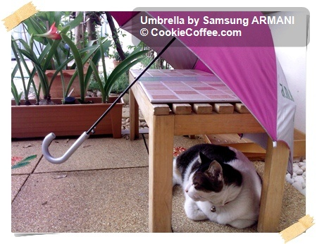 cat_umbrella