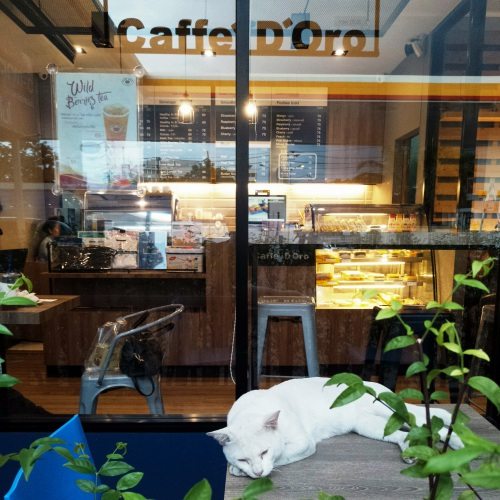 d-oro-caffe-ptt-shell-gas-station-cute-stray-cat-table-menu-coffee-vertu-signature-touch-review
