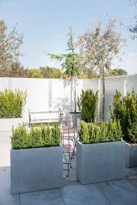 Terrassengarten-Bepflanzung im mediterranen Stil
