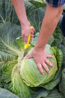Sauerkraut Salat_3607